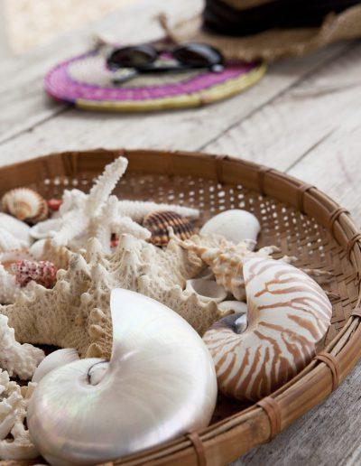 naturally made, very shiny seashell of formentera