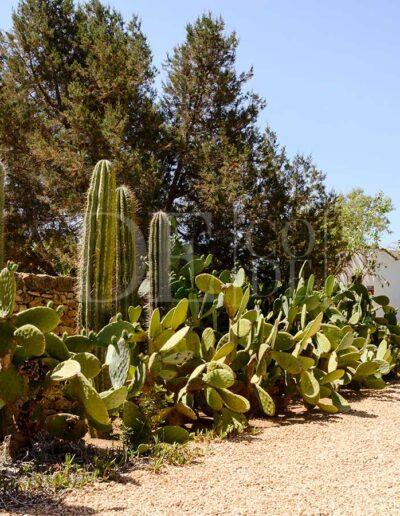 entry path full of nature in the beautiful villa casanita for rent in sant Francesc, formentera