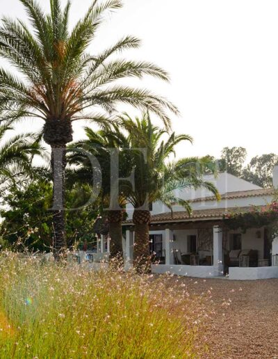 trees and nature surrounding the summer holidays villa casanita, for rent in formentera island